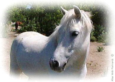 chevalblanc3.jpg